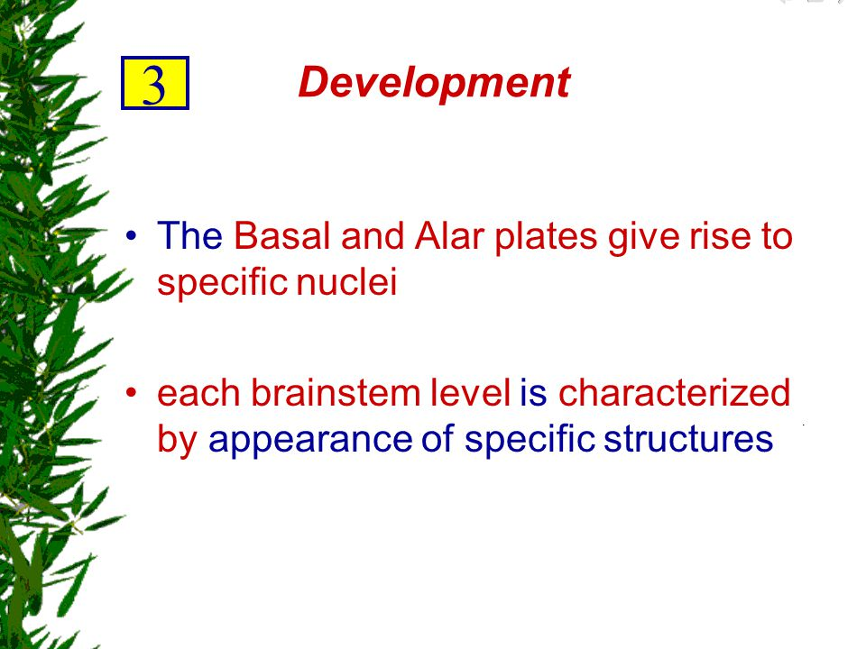3 Development The Basal and Alar plates give rise to specific nuclei