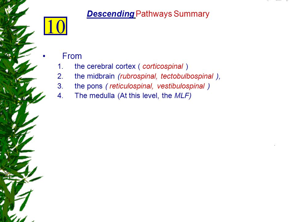 Descending Pathways Summary