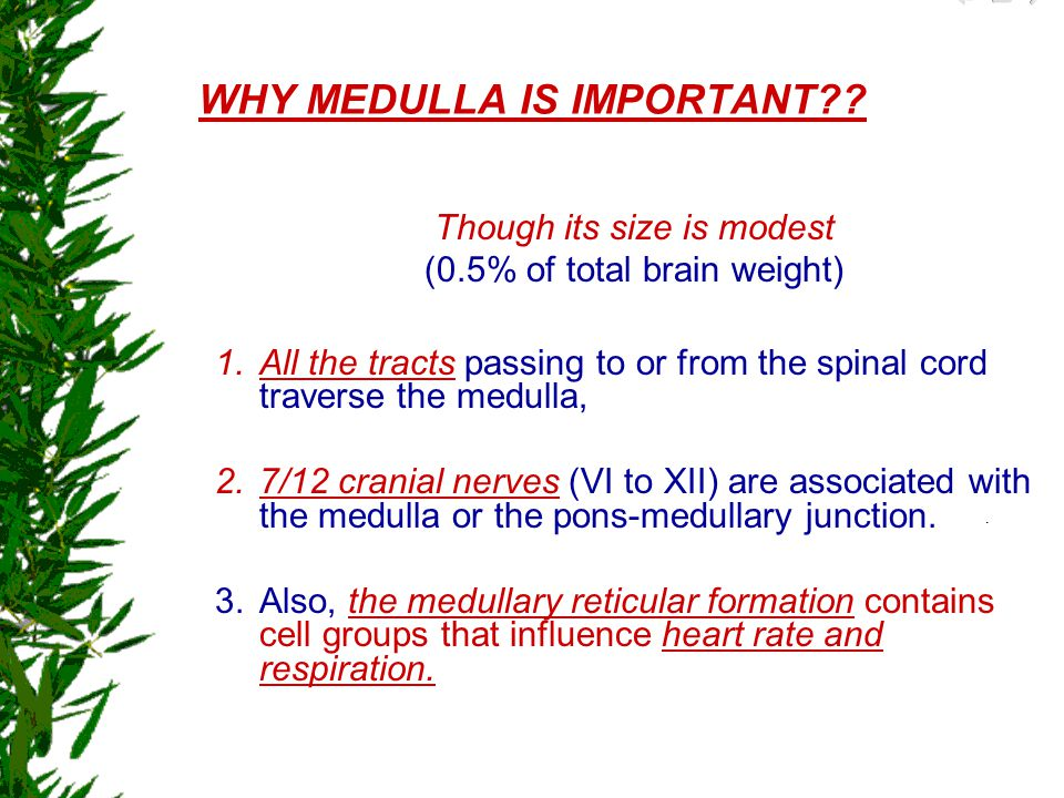 WHY MEDULLA IS IMPORTANT