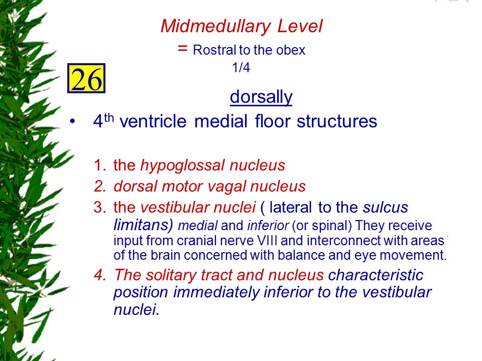 Midmedullary Level = Rostral to the obex 1/4