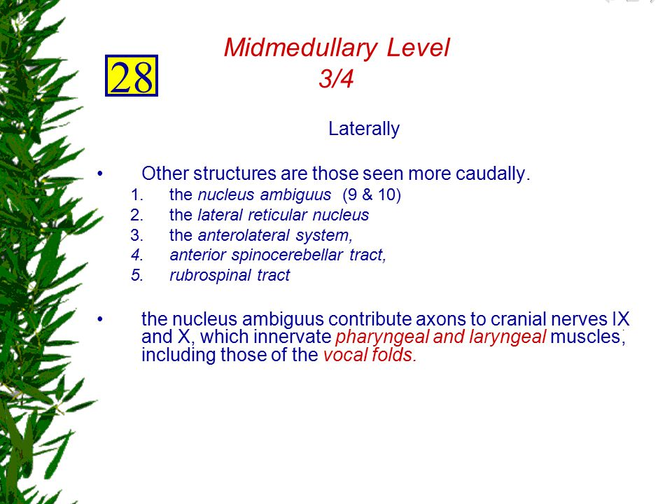 28 Midmedullary Level 3/4 Laterally