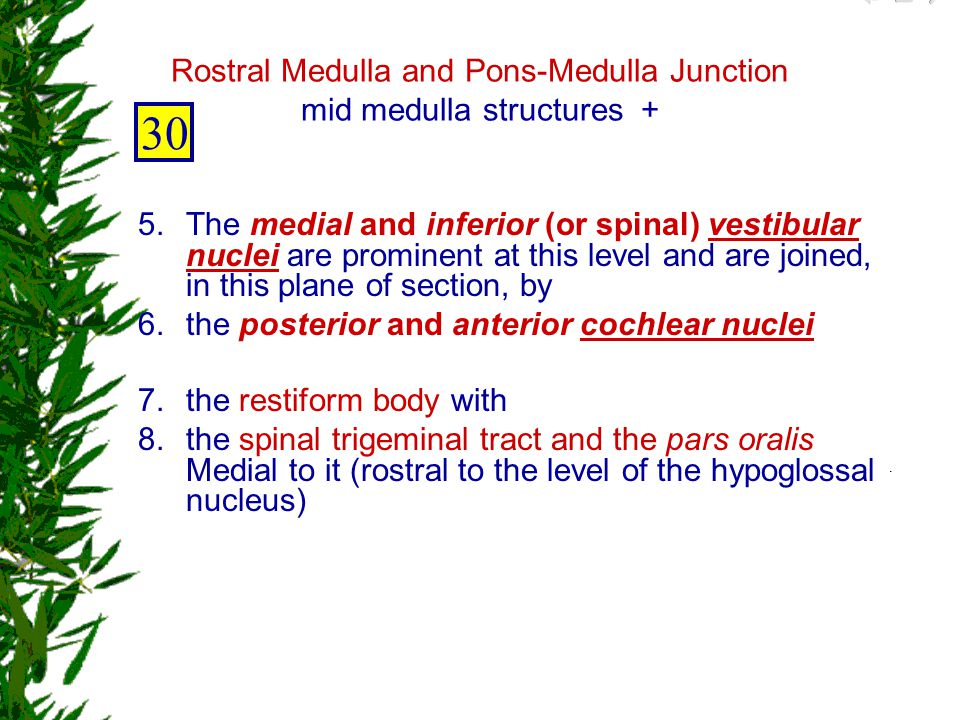 Rostral Medulla and Pons-Medulla Junction mid medulla structures +