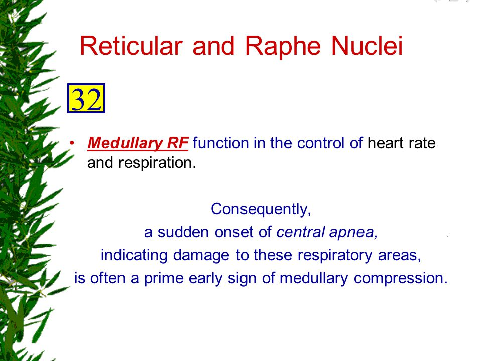 Reticular and Raphe Nuclei
