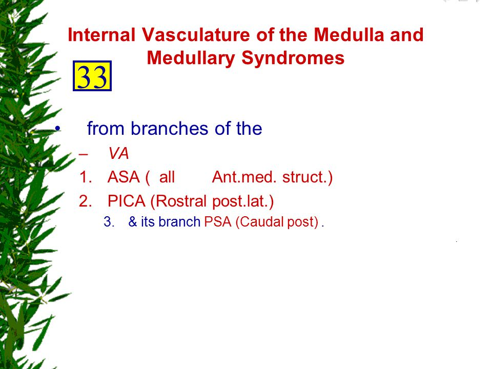 Internal Vasculature of the Medulla and Medullary Syndromes