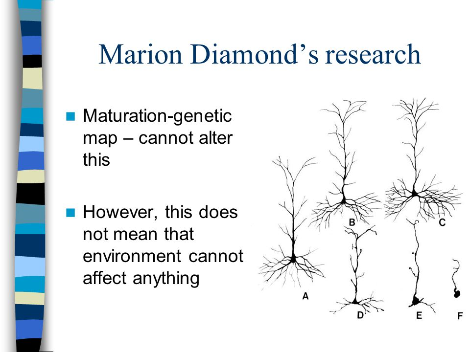 Marion Diamond's research