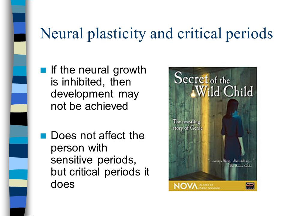 Neural plasticity and critical periods