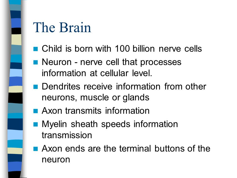 The Brain Child is born with 100 billion nerve cells