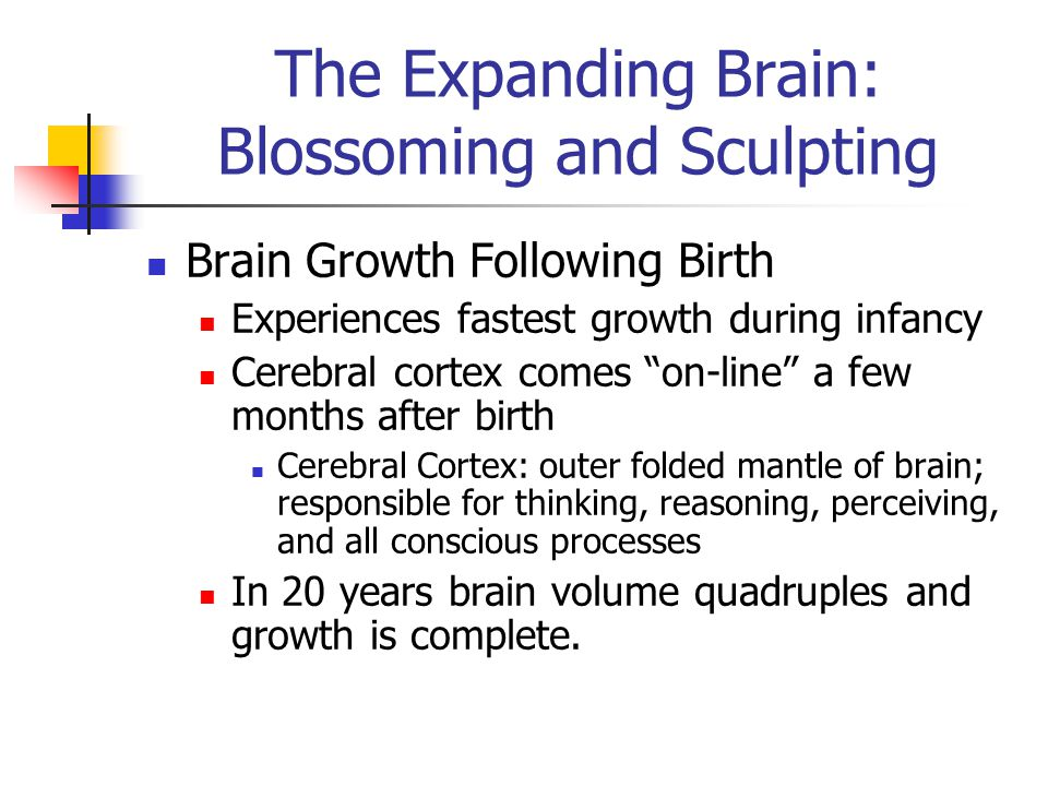 The Expanding Brain: Blossoming and Sculpting