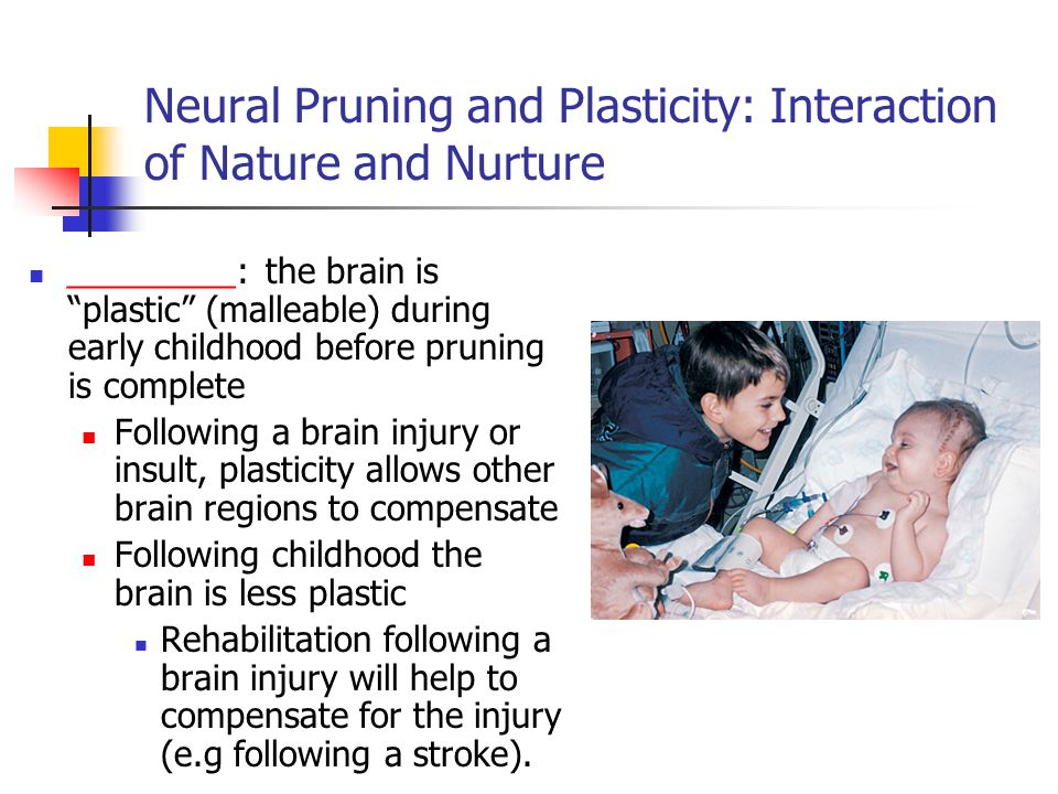 Neural Pruning and Plasticity: Interaction of Nature and Nurture