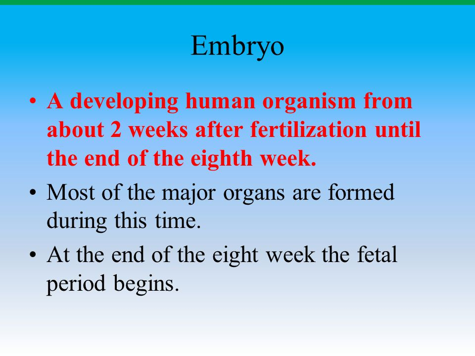 Embryo A developing human organism from about 2 weeks after fertilization until the end of the eighth week.