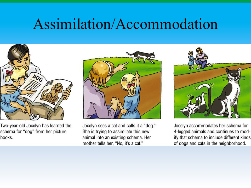 Assimilation/Accommodation