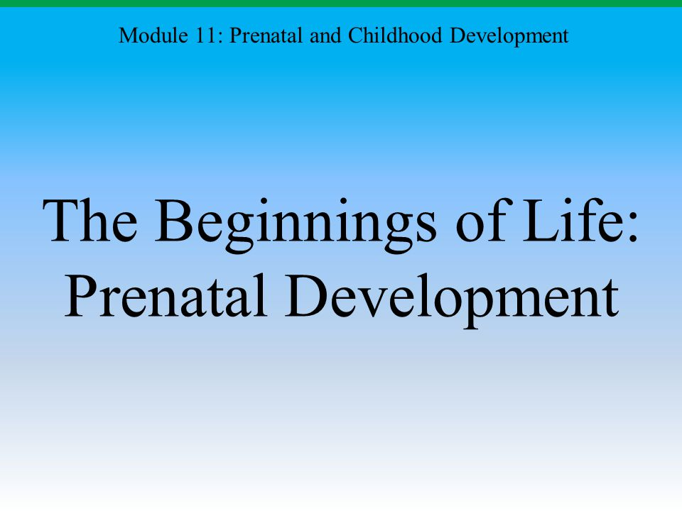 The Beginnings of Life: Prenatal Development