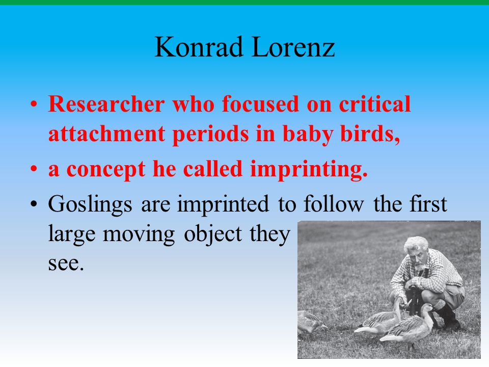 Konrad Lorenz Researcher who focused on critical attachment periods in baby birds, a concept he called imprinting.