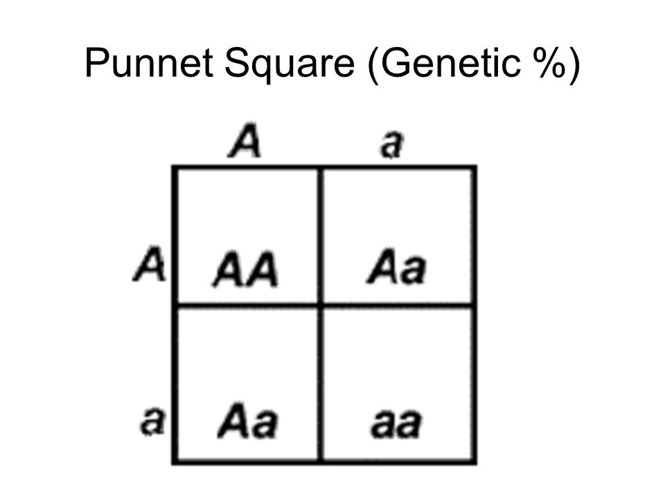 Punnet Square (Genetic %)