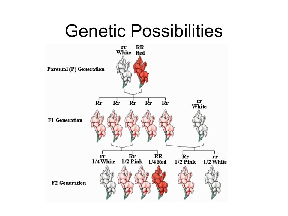 Genetic Possibilities