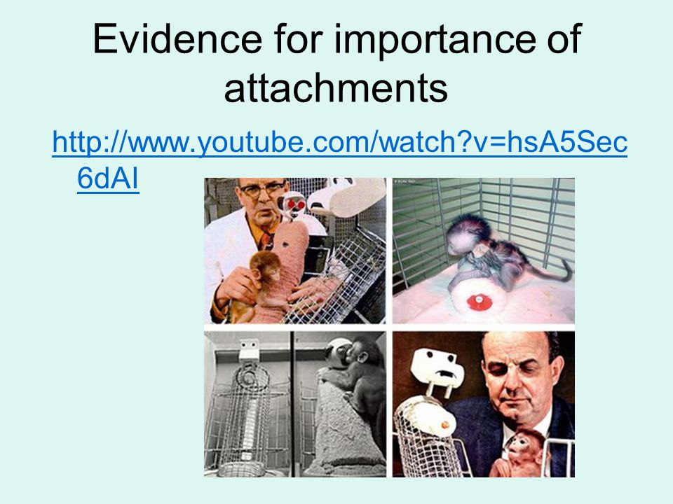 Evidence for importance of attachments