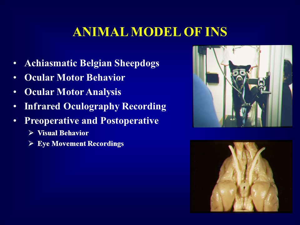 ANIMAL MODEL OF INS Achiasmatic Belgian Sheepdogs