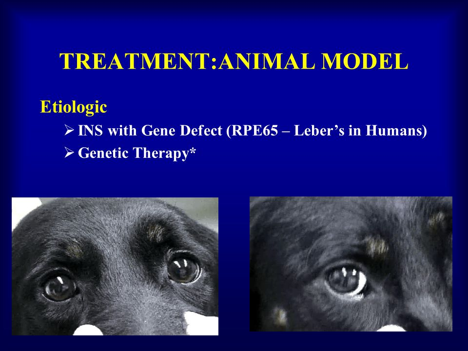 TREATMENT:ANIMAL MODEL