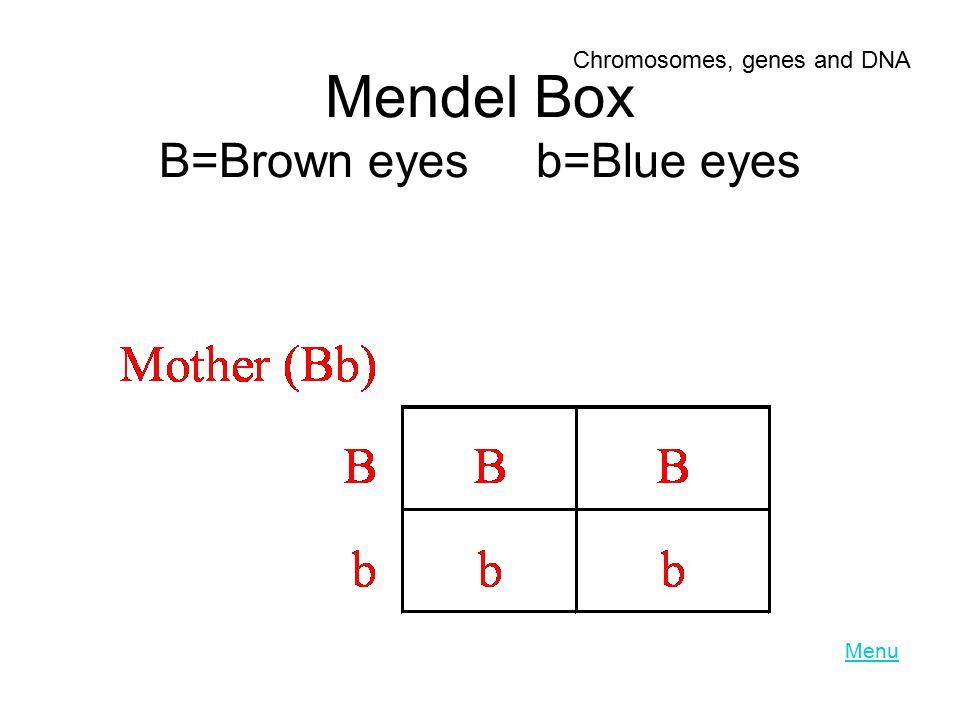 Mendel Box B=Brown eyes b=Blue eyes