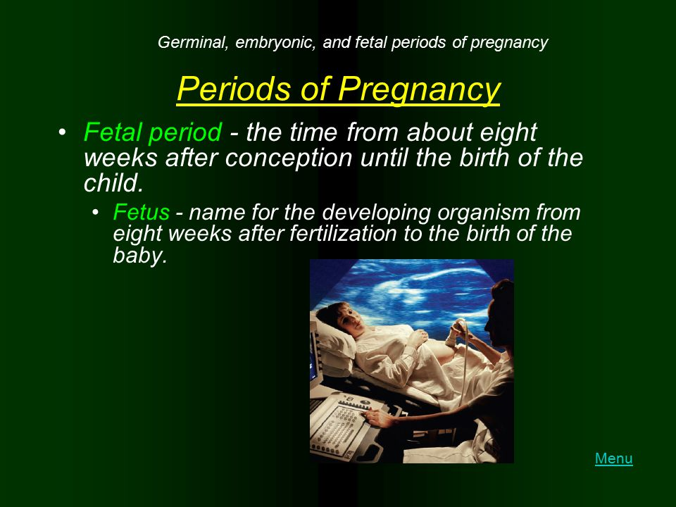 Germinal, embryonic, and fetal periods of pregnancy