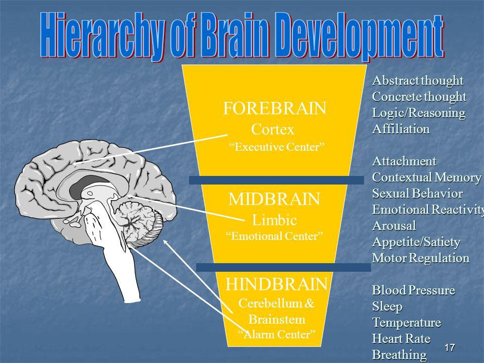 FOREBRAIN MIDBRAIN HINDBRAIN Cortex Limbic Abstract thought