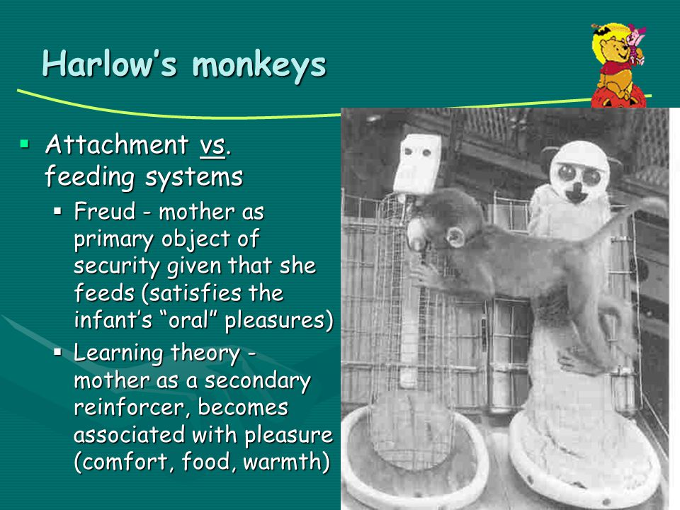 Harlow's monkeys Attachment vs. feeding systems
