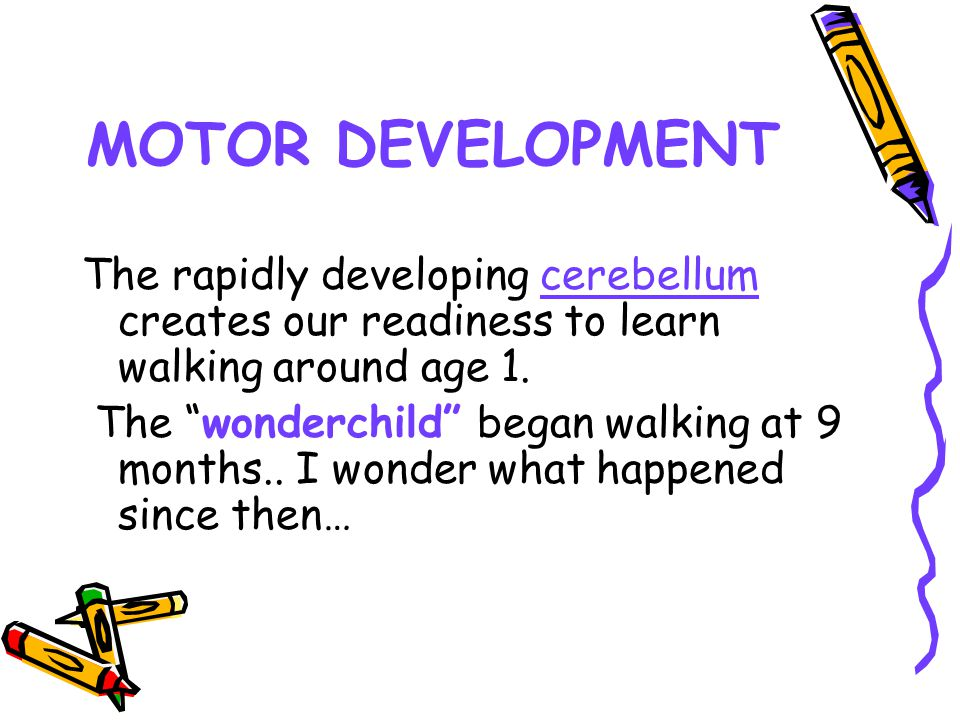 MOTOR DEVELOPMENT The rapidly developing cerebellum creates our readiness to learn walking around age 1.
