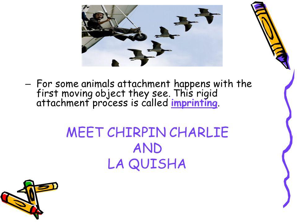 MEET CHIRPIN CHARLIE AND LA QUISHA