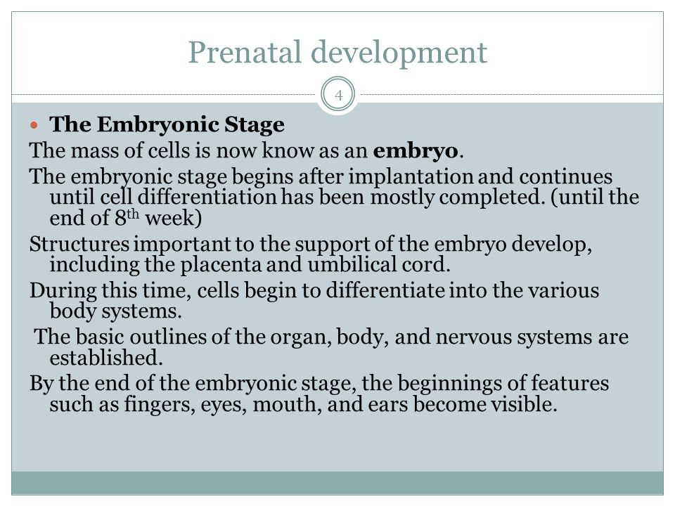 Prenatal development The Embryonic Stage