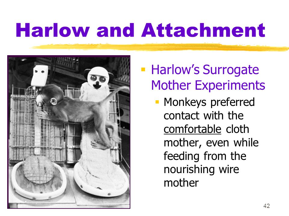 Harlow and Attachment Harlow's Surrogate Mother Experiments