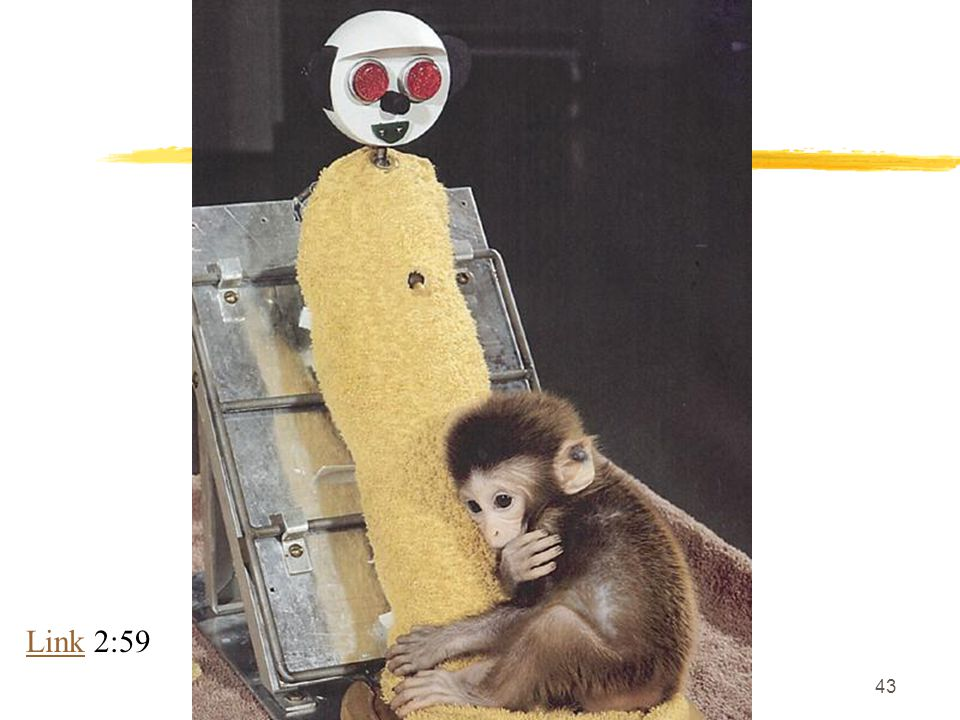 An infant monkey clings to a cloth-covered surrogate mother