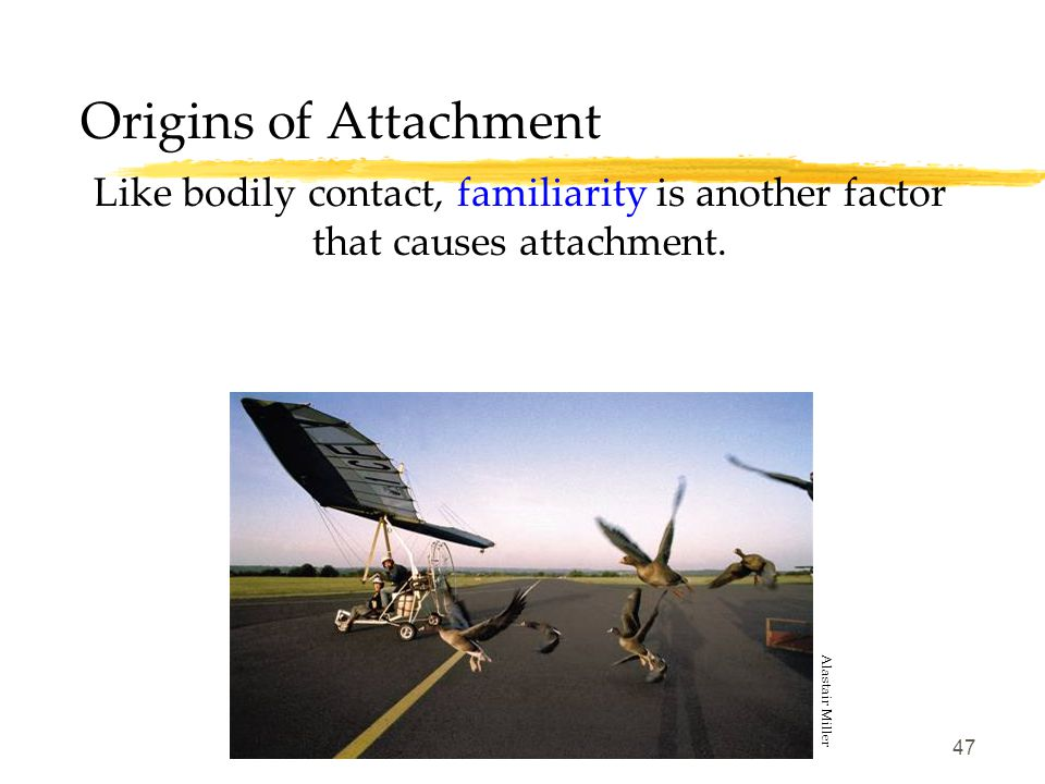 Origins of Attachment Like bodily contact, familiarity is another factor that causes attachment.