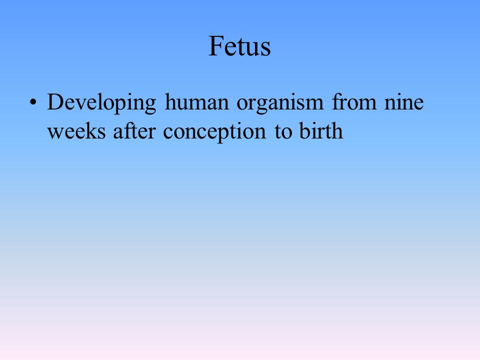 Fetus Developing human organism from nine weeks after conception to birth