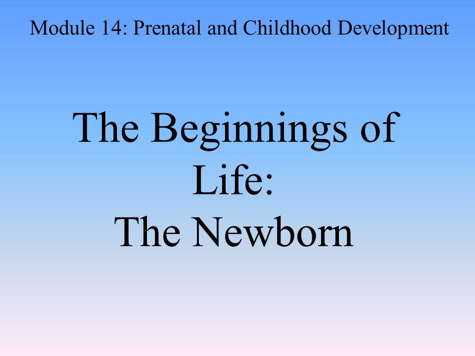 The Beginnings of Life: The Newborn