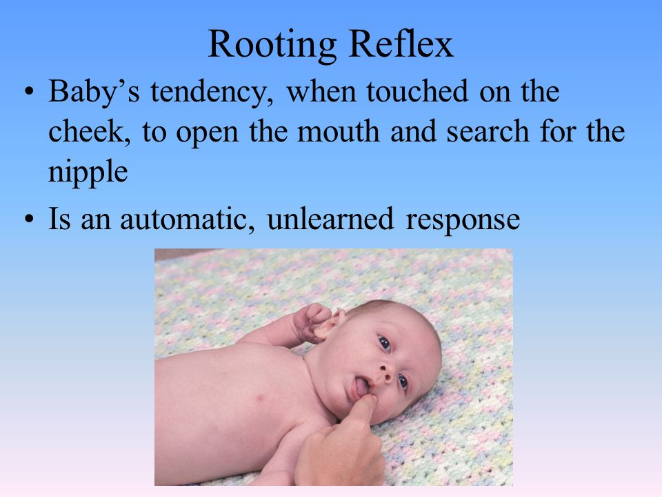 Rooting Reflex Baby's tendency, when touched on the cheek, to open the mouth and search for the nipple.