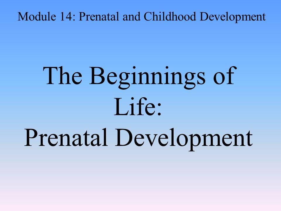 The Beginnings of Life: Prenatal Development