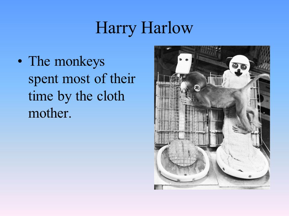 Harry Harlow The monkeys spent most of their time by the cloth mother.
