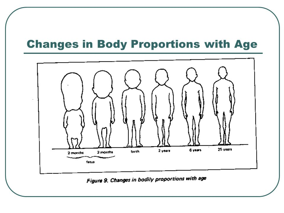 Changes in Body Proportions with Age