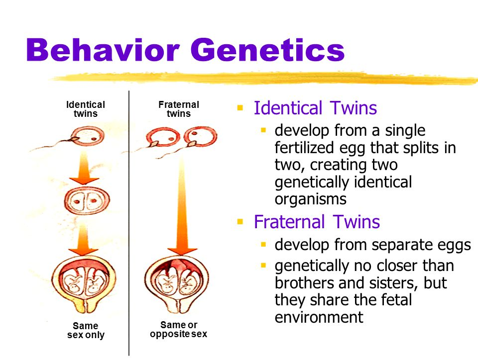 Behavior Genetics Identical Twins Fraternal Twins
