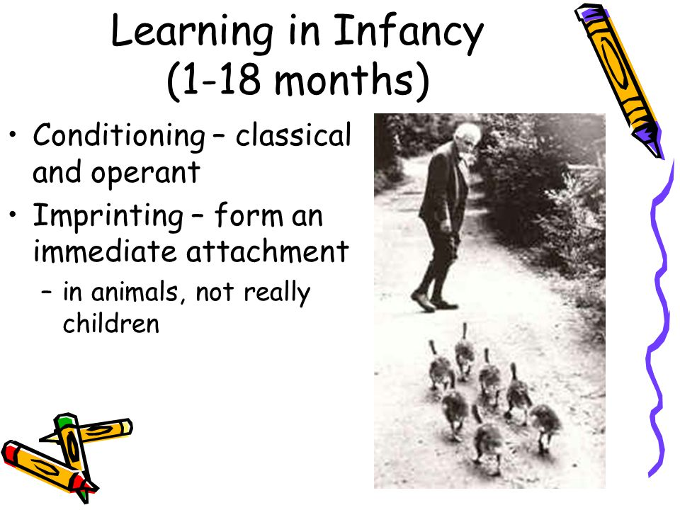 Learning in Infancy (1-18 months)