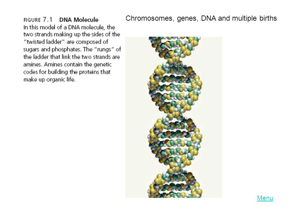 LO 8.3 Chromosomes, genes, DNA and multiple births