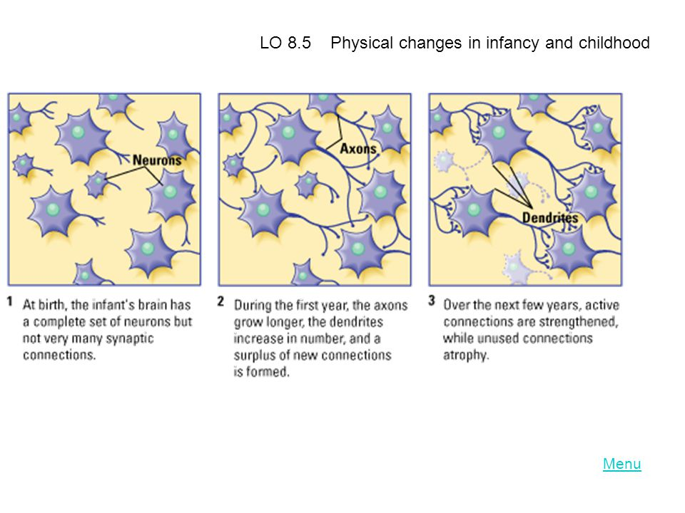 LO 8.5 Physical changes in infancy and childhood
