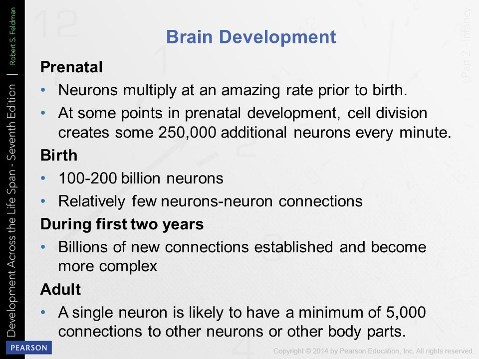 Brain Development Prenatal