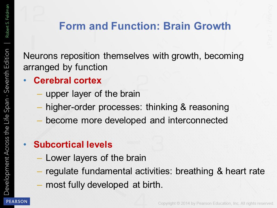 Form and Function: Brain Growth