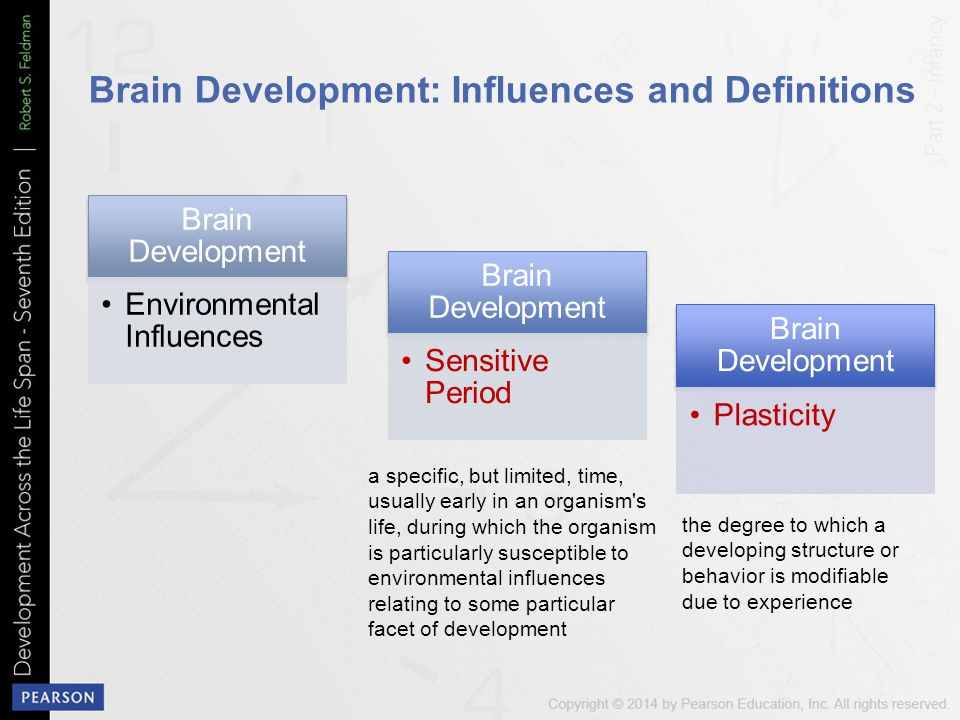 Brain Development: Influences and Definitions