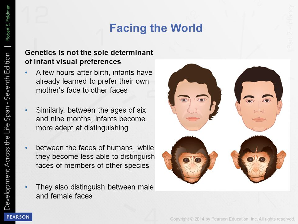 Facing the World Genetics is not the sole determinant of infant visual preferences.