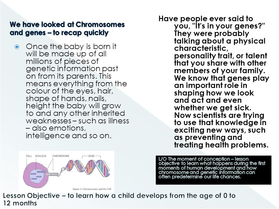 We have looked at Chromosomes and genes – to recap quickly