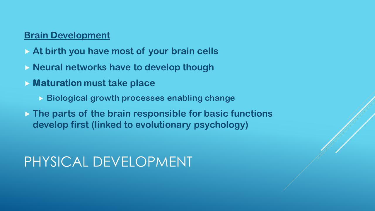 Physical Development Brain Development