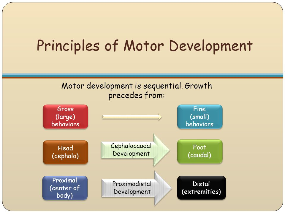 What are the Principles and Stages of Development in Children's?