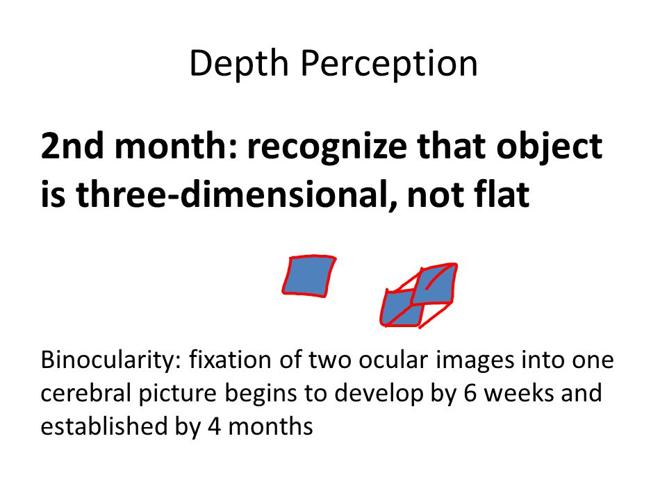 2nd month: recognize that object is three-dimensional, not flat